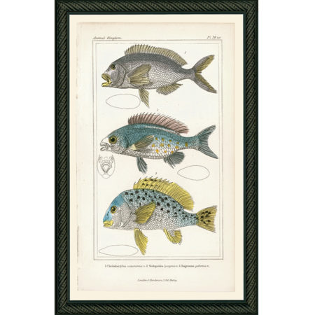 Fish29BDB_150