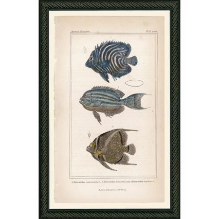 Fish31BDB_150