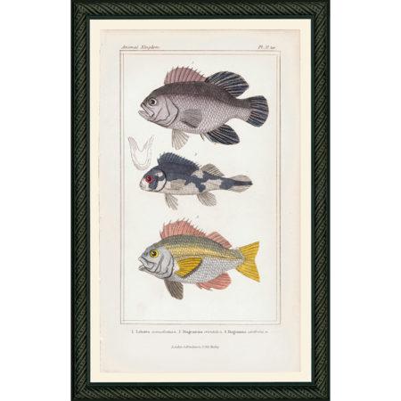 Fish37BDB_150