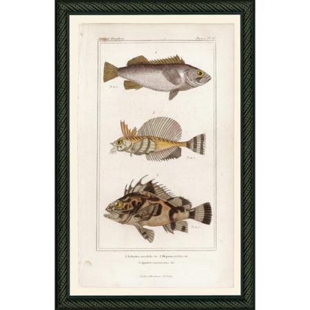 FishPisces26BDB_150