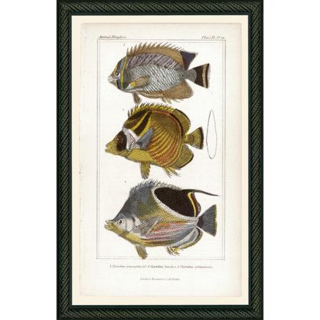 FishPisces29BDB_150