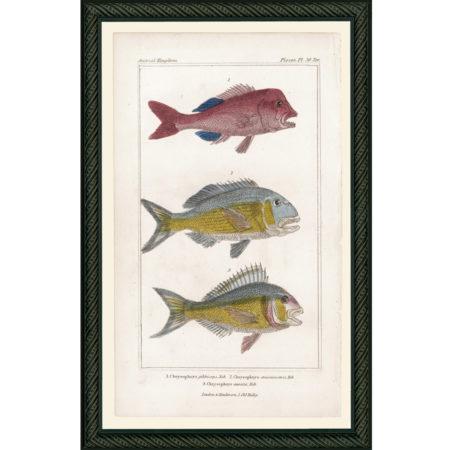 FishPisces30rBDB_150