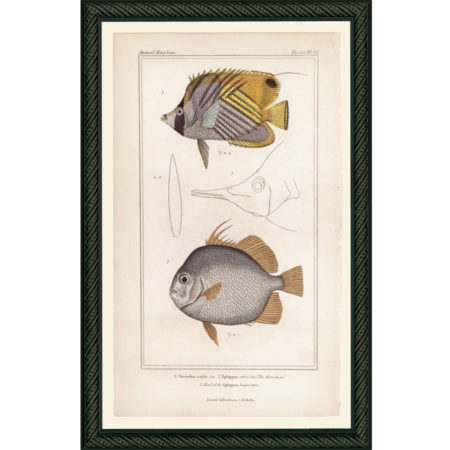 FishPisces32BDB_150