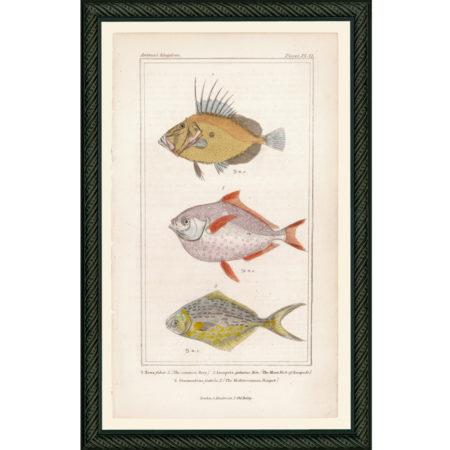 FishPisces42BDB_150